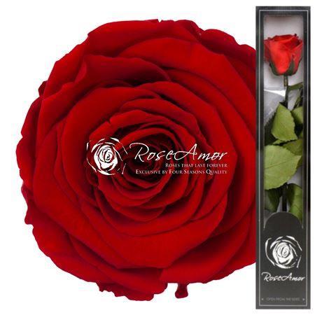 Rose éternelle Red02